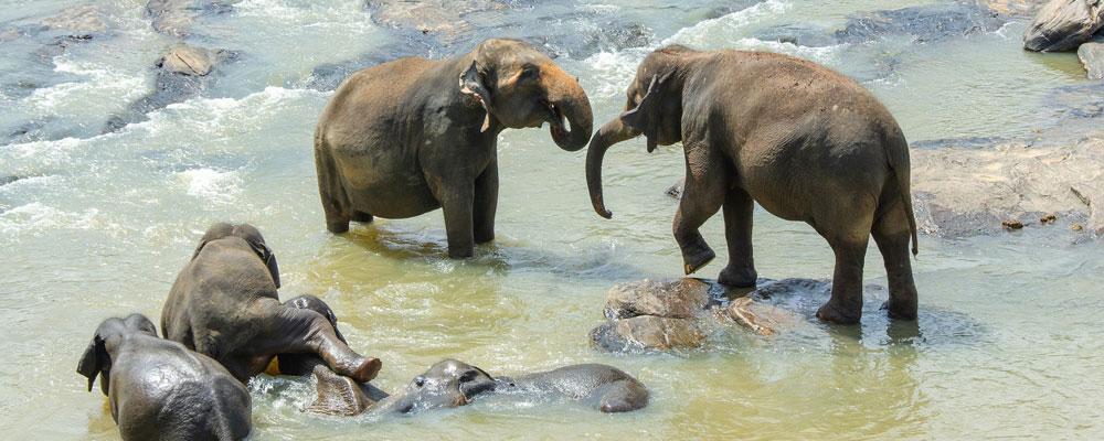voyage-au-Sri-Lanka-entre-seniors-actifs-ou-retraites